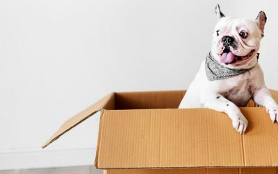 Reliable Ways of Moving House with Pets in Perth