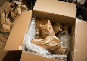 tips to remember moving house with pets