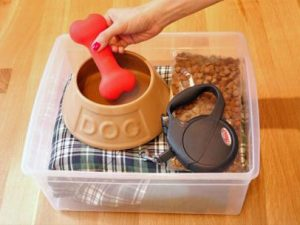 keep essential of your pet