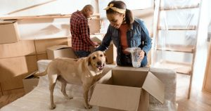 Keep safe your pet on moving day