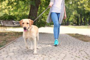 taking pet outside for exercise